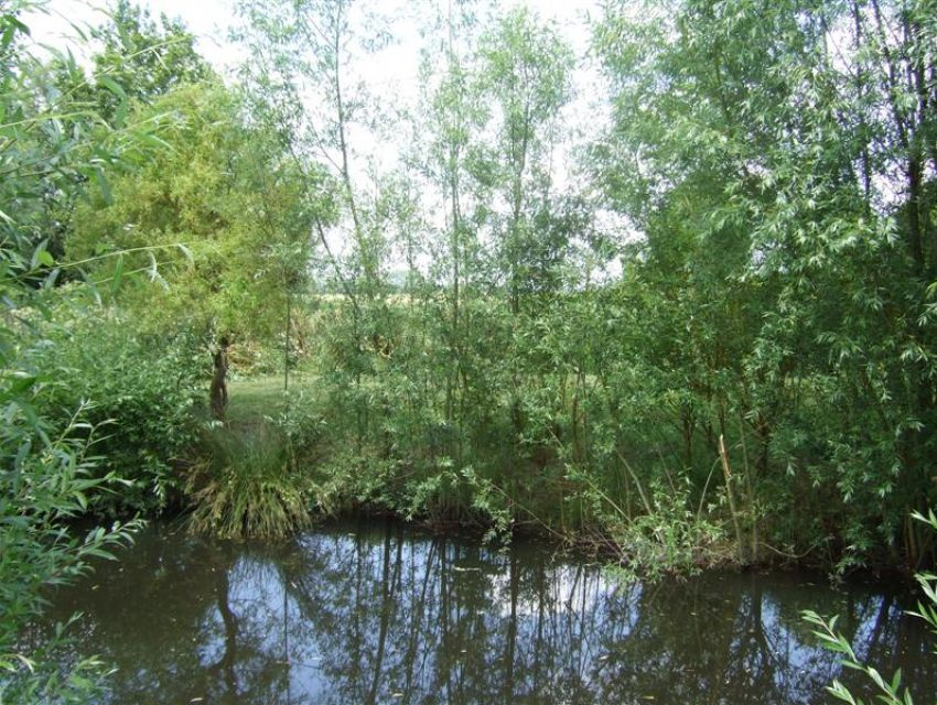 Anjou - Maine et Loire -  propriété de caractère - jardin avec petite pièce d'eau